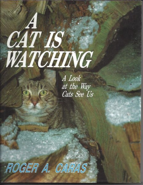 Image for A Cat is Watching A Look At the Way Cats See Us