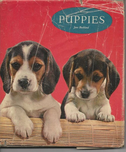 Image for Puppies in Colour