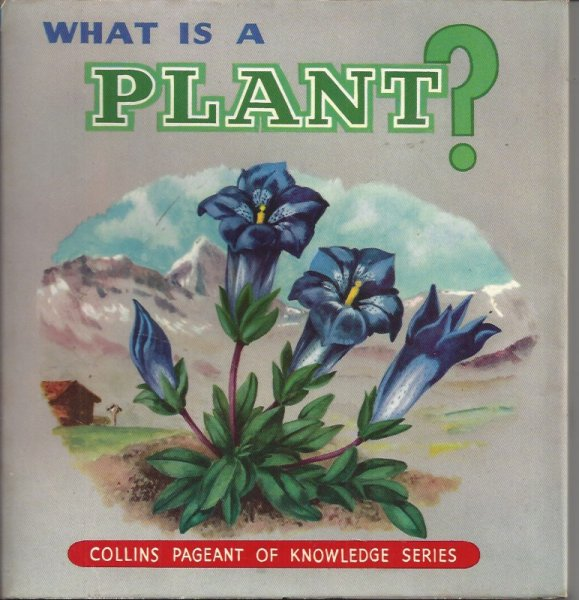 Image for What is a Plant?