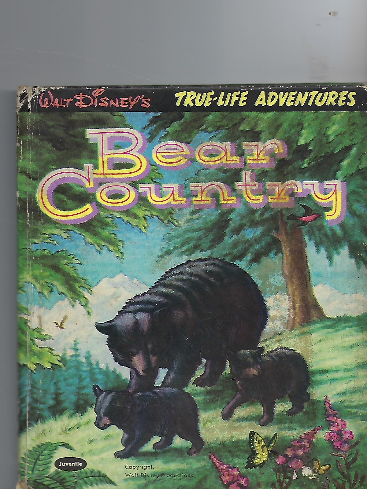 Image for Walt Disney's Bear Country